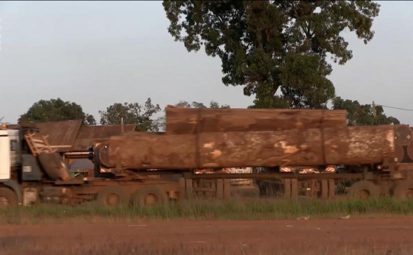 Plongez dans la déforestation des forêts primaires sous label FSC